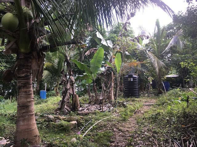Ecotourism Jamaica Durgas Farm